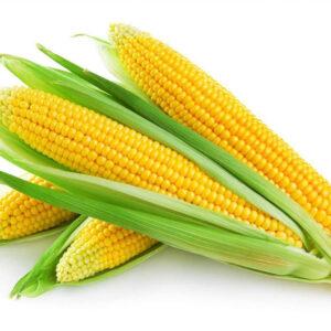 Семена кукурузы ДС1304С