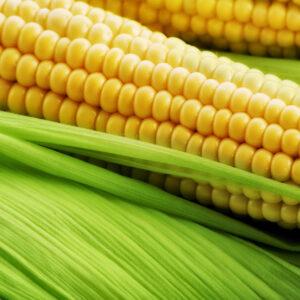 Семена кукурузы Евро