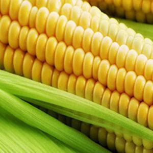 [:ru]Семена кукурузы ЕС Кокпит[:ua]Насіння кукурудзи ЄС Кокпіт [:]