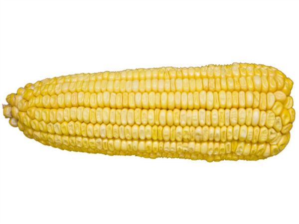 Семена кукурузы Красилов