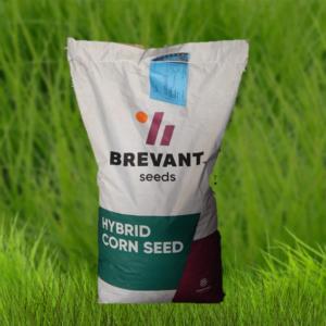 Семена кукурузы ДС0493Б DS0493B