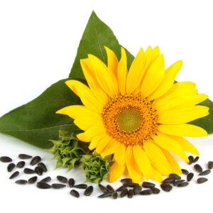 [:ru]Семена подсолнечника МАS 83.r[:ua]Насіння соняшника Маs 83.r [:]