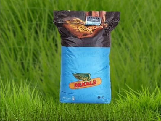 Семена кукурузы ДКС 4795