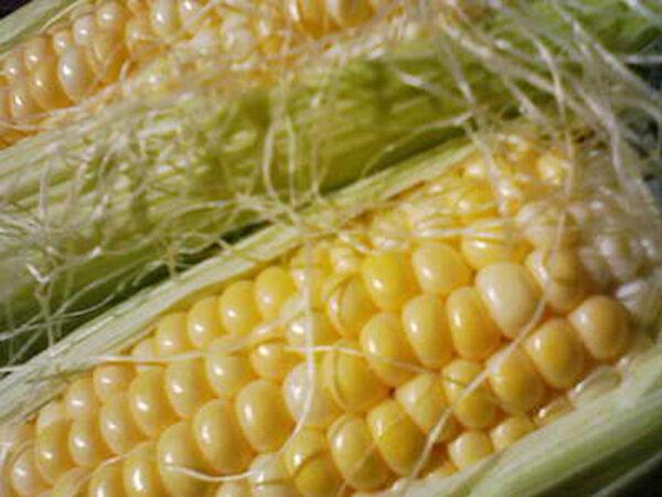 Семена кукурузы НС 2012