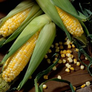 [:ru]Семена кукурузы НС-2622 [:ua]Насіння кукурудзи НС-2622 [:]