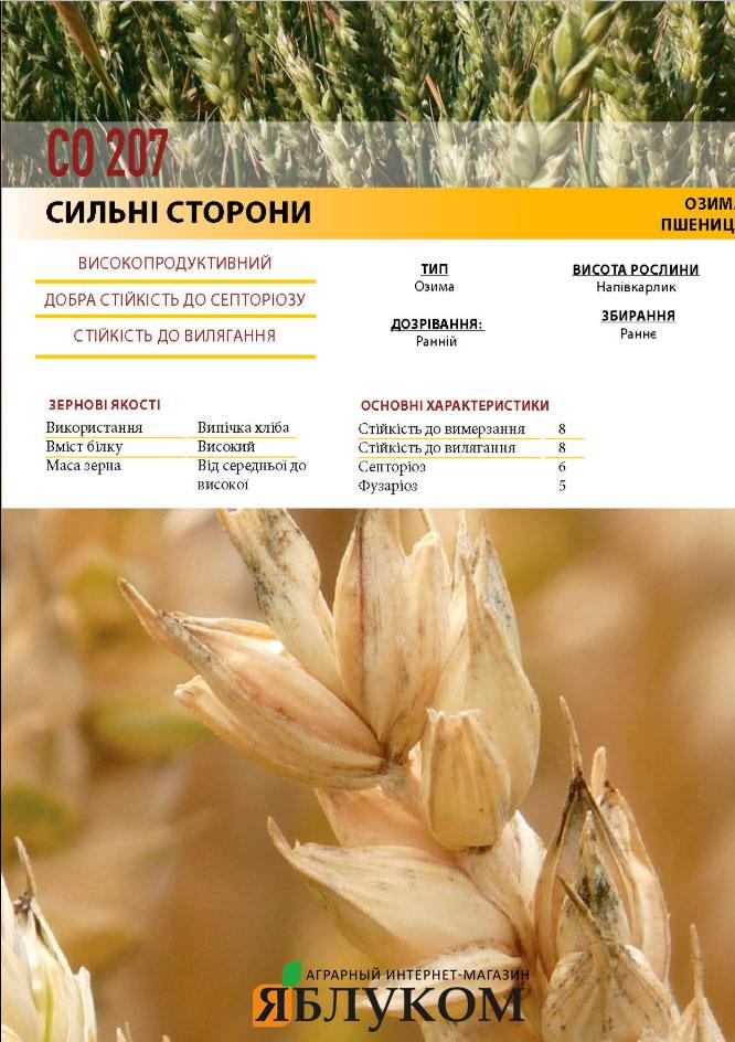 Семена озимой пшеницы СО 207