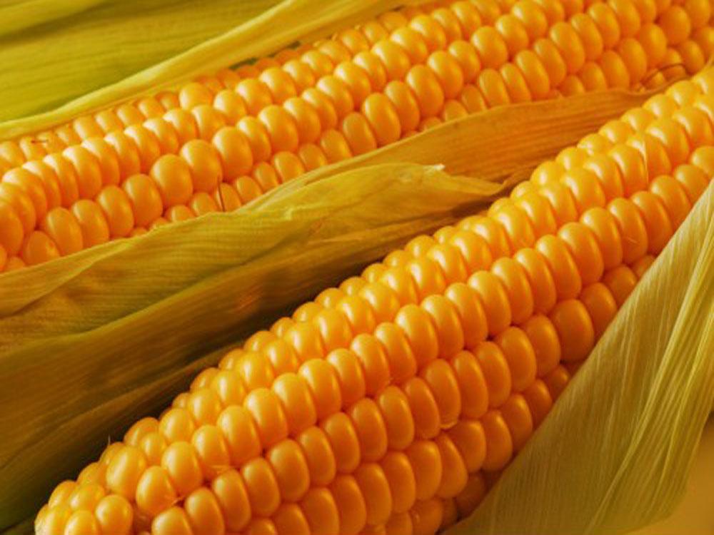 Семена кукурузы Тоначия