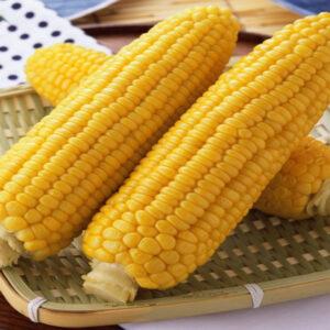 Семена кукурузы Визир
