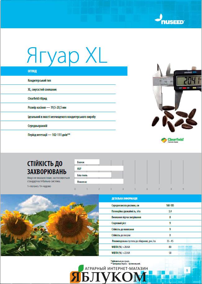 Семена подсолнечника Ягуар XL