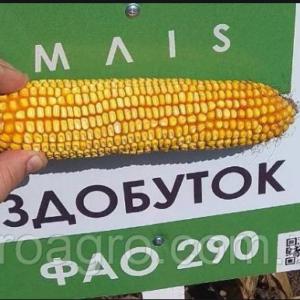Семена кукурузы Здобуток