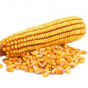 [:ru]Семена кукурузы Кайфус[:ua]Насіння кукурудзи Кайфус[:]