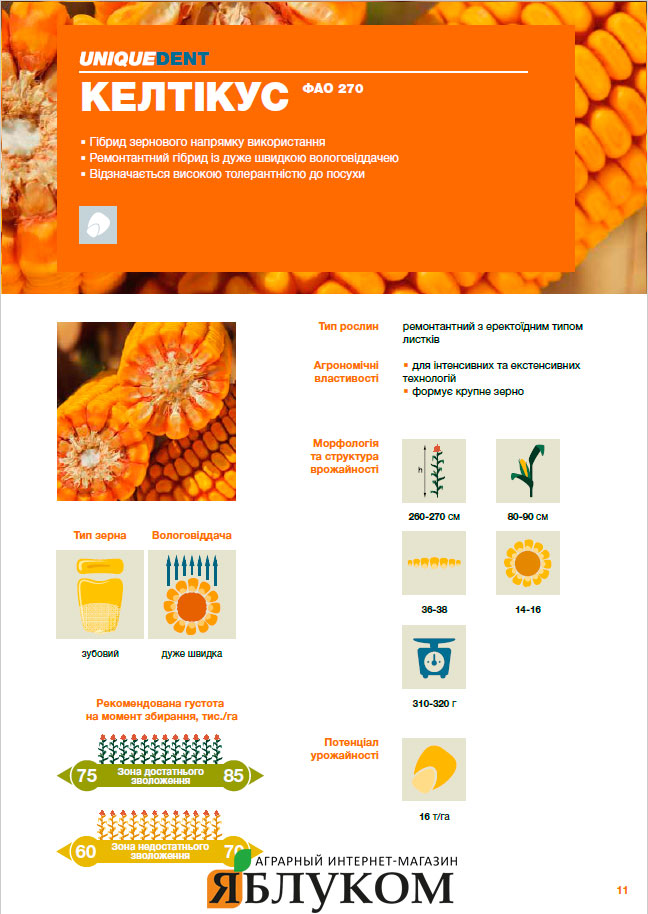 Семена кукурузы Келтикус