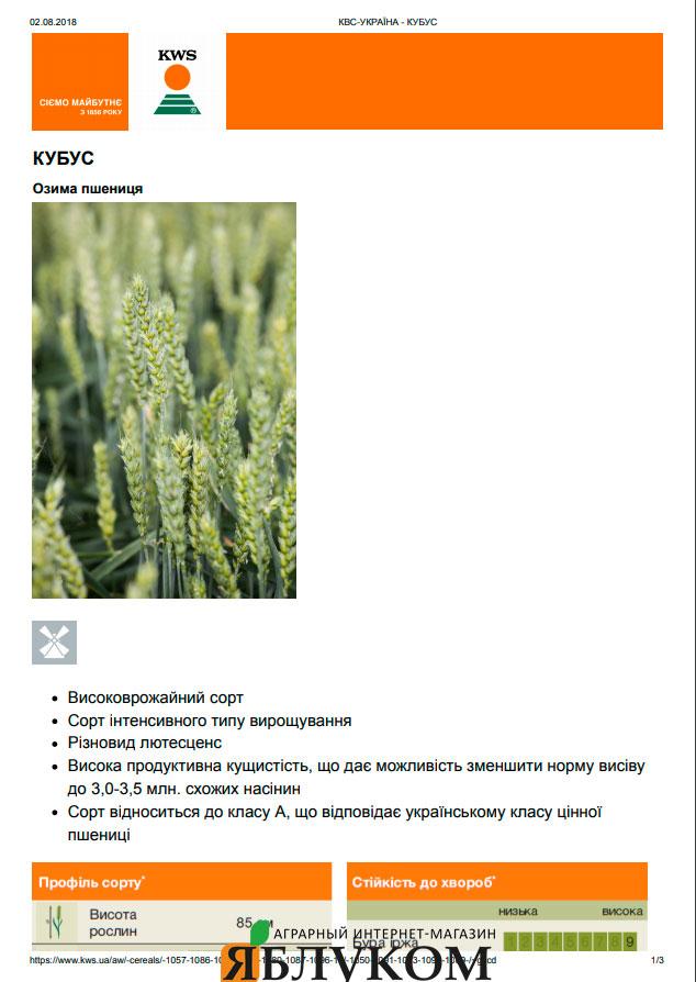 Семена озимой пшеницы Кубус