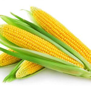 Семена кукурузы Агральп 200