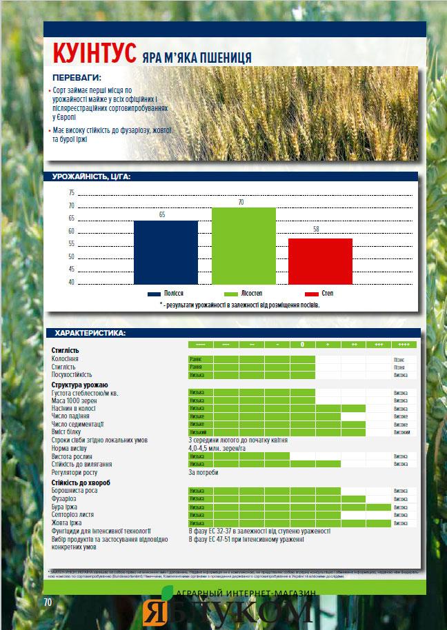 Семена яровой пшеници Куинтус