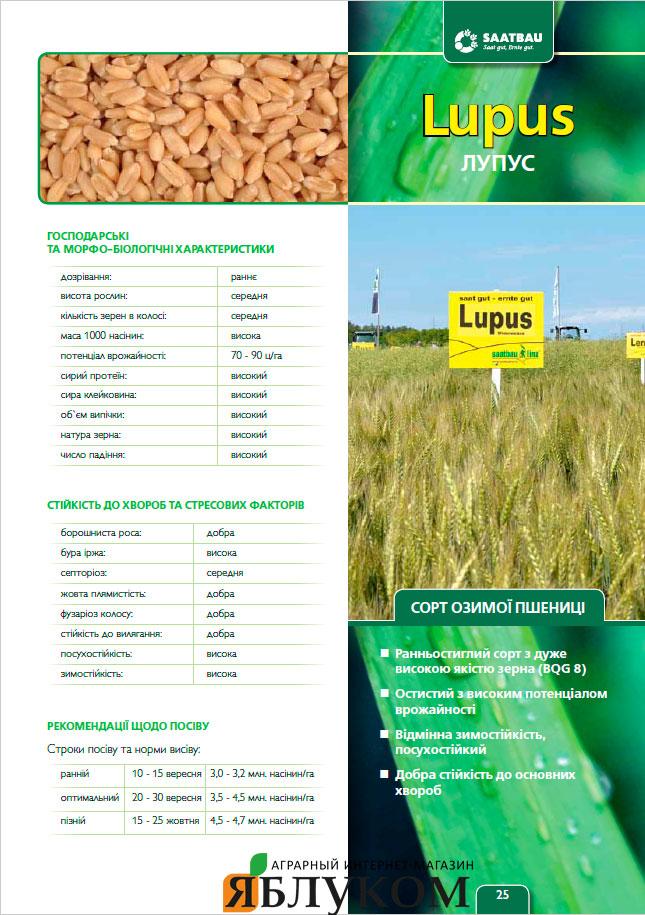 Семена озимой пшеницы Лупус