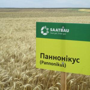 [:ru]Семена озимой пшеницы Панноникус[:ua]Насіння озимої пшениці Паннонікус[:]