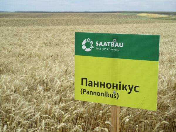 Семена озимой пшеницы Панноникус