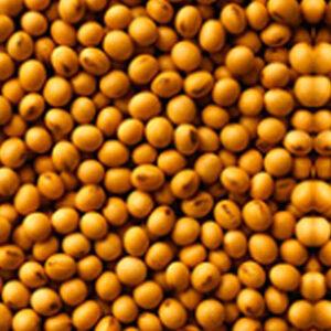 Семена сои Парадис