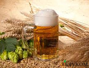 Технология выращивания пивоваренного ячменя
