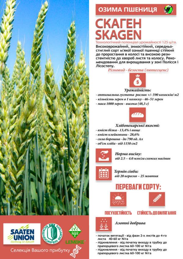 Семена озимой пшеницы Скаген
