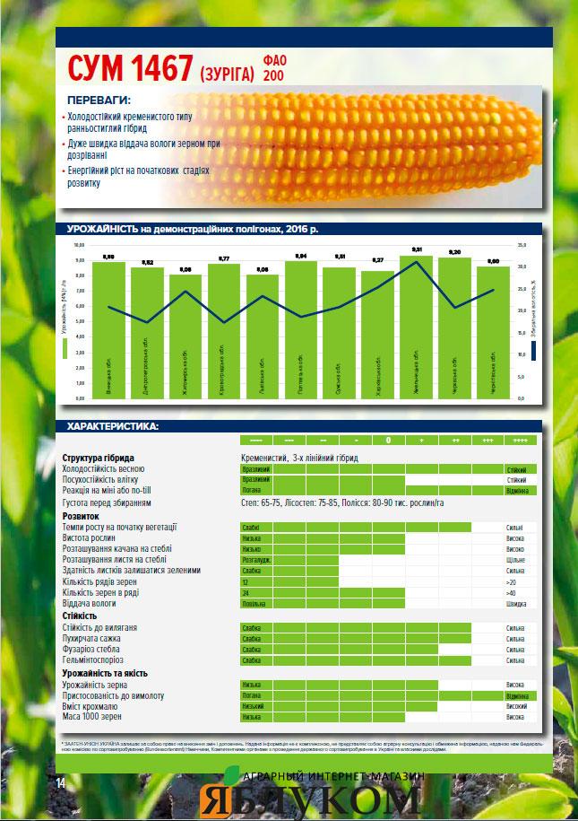 Семена кукурузы СУМ 1467
