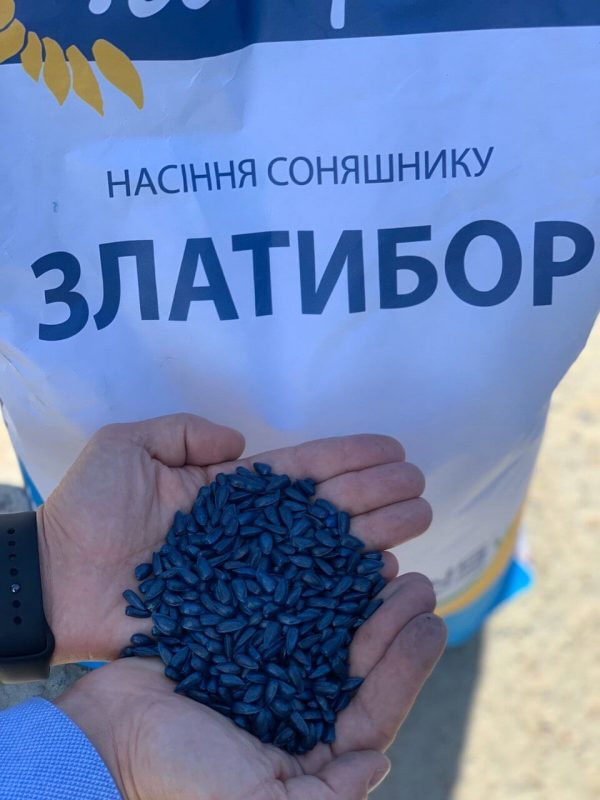 Семена подсолнечника Златибор