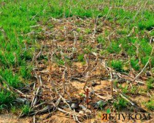 Последействие гербицидов – воздействие на урожайность