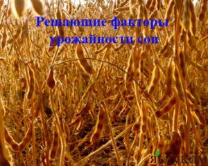 Решающие факторы урожайности сои
