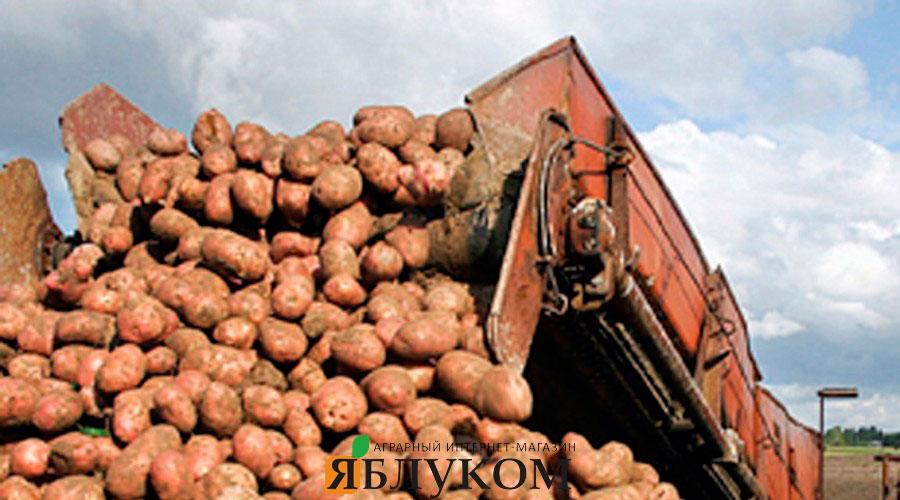 От чего зависит урожайность картофеля