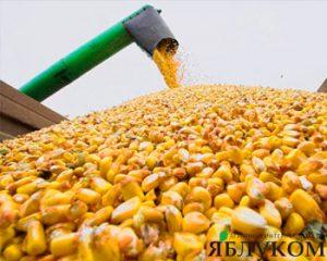 Как увеличить урожайность кукурузы