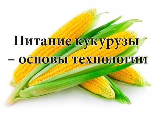 Питание кукурузы – основы технологии