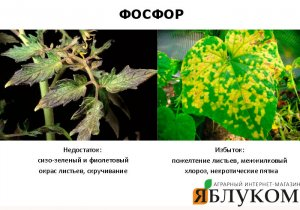 Влияние различных форм фосфора на растения