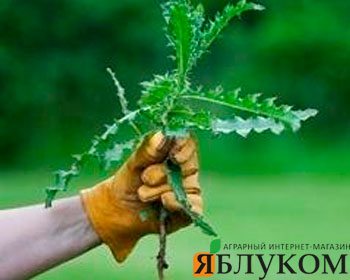 Гербициды на основе 2,4-Д эффективность или традиция