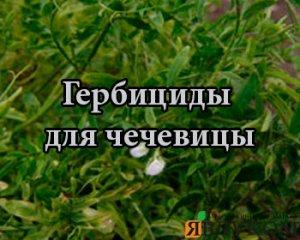 Гербициды для чечевицы