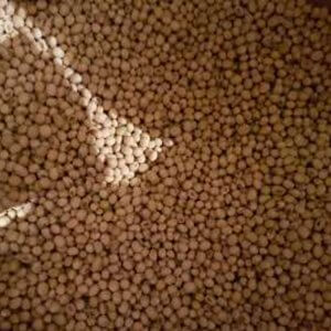 Семена сои Хадсон