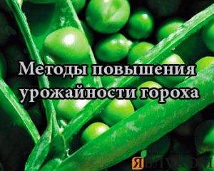 Методы повышения урожайности гороха
