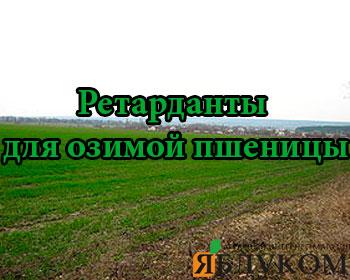 Ретарданты для озимой пшеницы