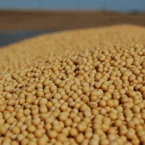 Семена сои Хайпро
