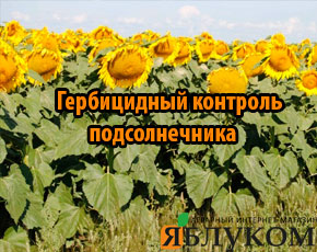 Виды гербицидного контроля сорняков в посевах подсолнечника