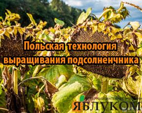 Польская технология выращивания подсолнечника