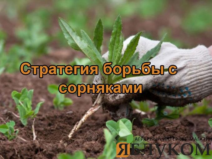 Стратегия борьбы с сорняками