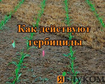 Как действуют гербициды?