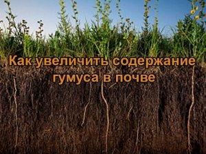 Как увеличить содержание гумуса в почве