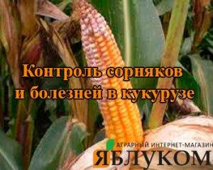 Контроль сорняков и болезней в кукурузе