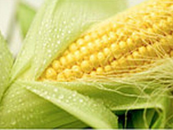 Семена кукурузы ДМС Адаптер