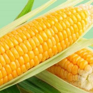 Семена кукурузы Бенефис