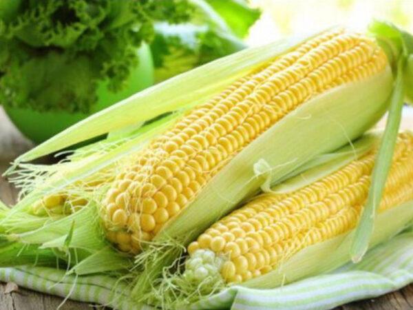 Семена кукурузы ДМС 4011