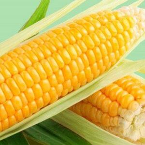 [:ru]Семена кукурузы Лорд[:ua]Насіння кукурудзи Лорд[:]