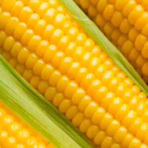 Семена кукурузы Немиров